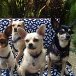 four dogs chair
