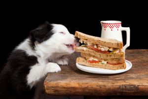 dog-and-food_1-jpg
