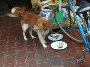 In a market in Vietnam, a woman put her plate down for a small dog to finish off the scraps.